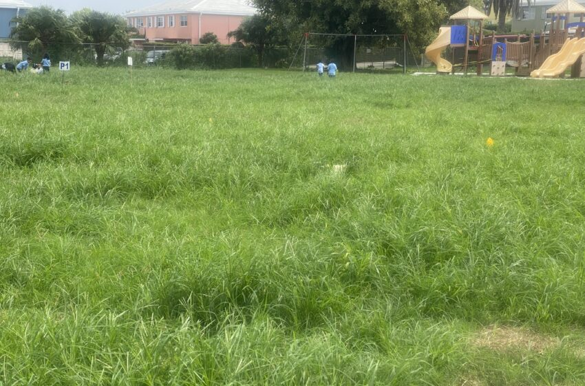 Prospect Primary Reopens Despite Untrimmed Field and Ant Infestation